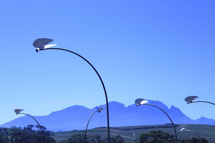 Temporary sculptural installation of solar lights in the landscape.