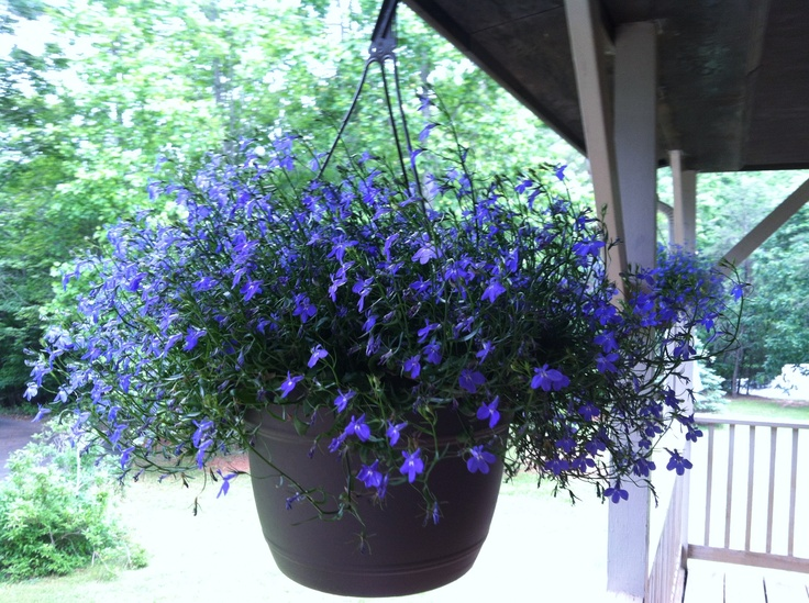 Periwinkle Hanging Porch Baskets My Home Pinterest