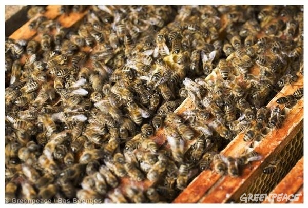 EU bans three bee-killer pesticides: a light of hope for bees and agriculture #green #sustainability #rmogreen