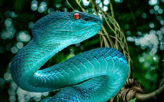 Blaue Schlangen