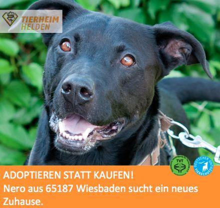 Nero wurde herrenlos gefunden. http//www.tierheimhelden
