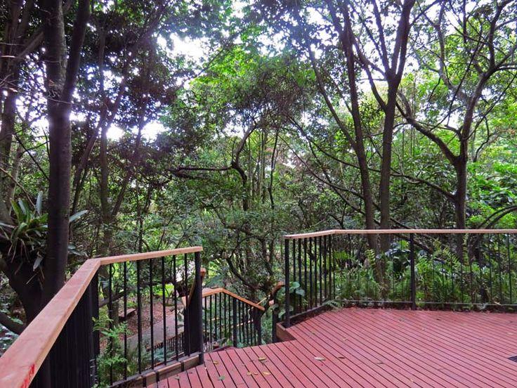 15. Mirador del bosque en el Jardín De Los Helechos.