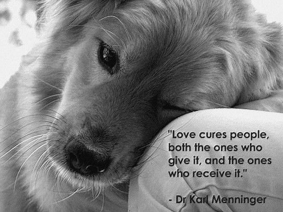 Love cures people, both the ones who give it, and the ones who receive it. - Dr. Karl Menninger