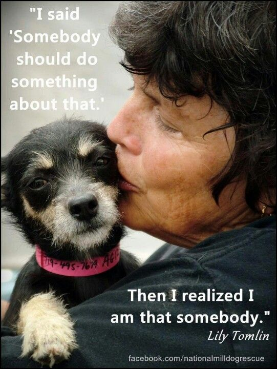 Be that person that when you see an animal being mistreated or homeless, be the one who does something about it, adopt or take the dog in, do something about it. They are the most loyalist animals.
