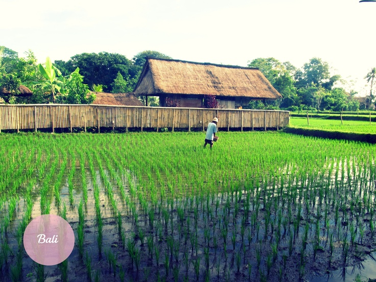 Outside my hotel in Bali, I woke up next to the rice paddies. It was the most peaceful I ever been.