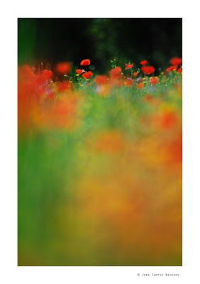 JUAN SANTOS-LUZ NATURAL BLOG: Impresiones de primavera