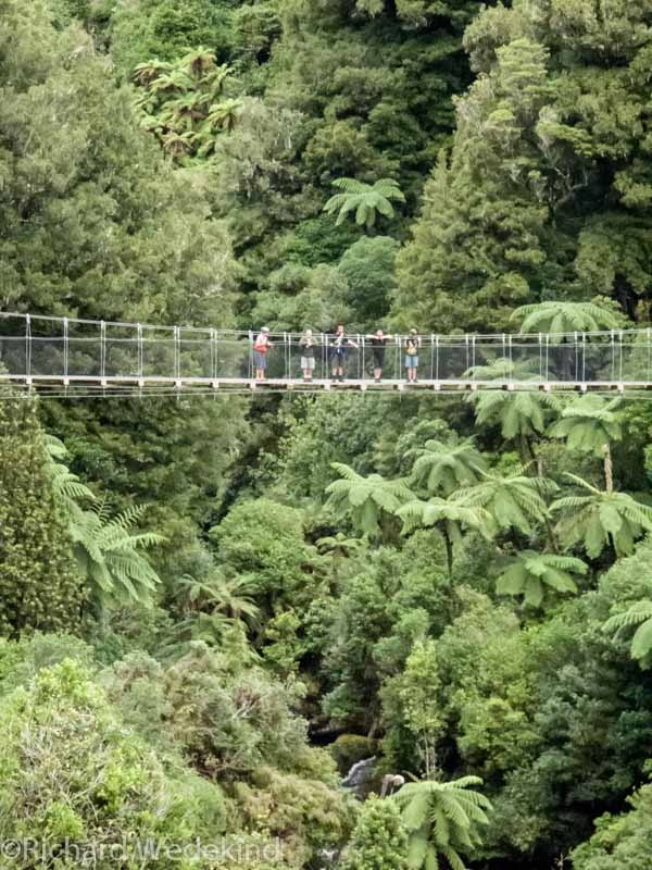 Suspension bridge on the Timber Trail cycleway through Pureora Forest Park.