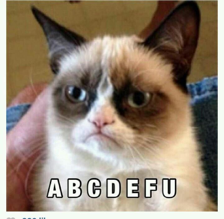 grumpy cat wedding invitations%0A Abc
