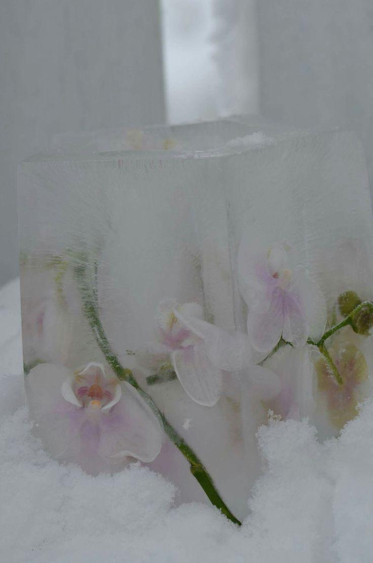 Islykt med orchider