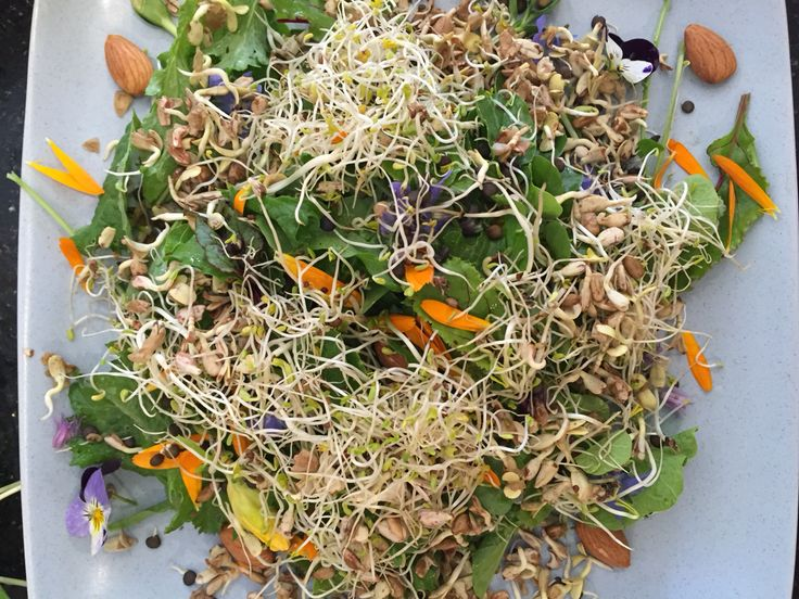 7. Add seed #sprouts such as #alfalfa, #sunflower #fenugreek.