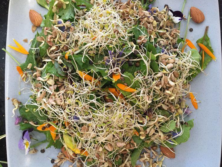 7. Add seed #sprouts such as #alfalfa, #sunflower #fenugreek.