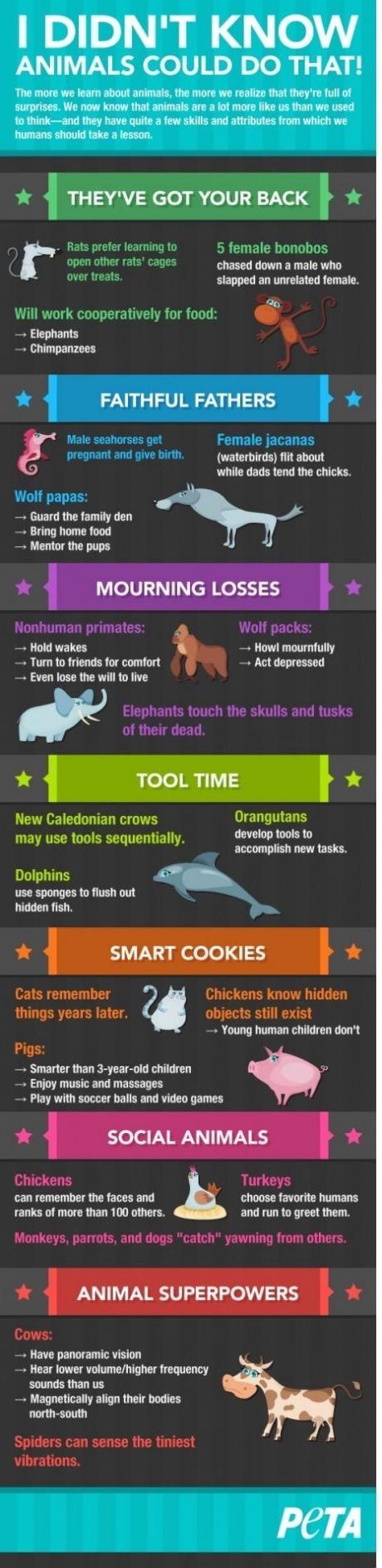 Mind. Blown, animal facts