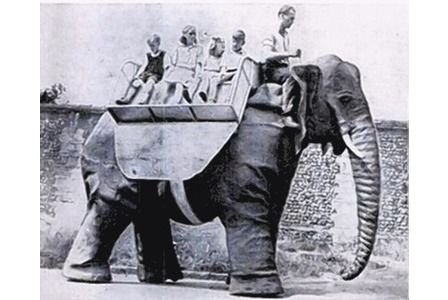 RIDE OF THEIR LIVES: These Thaxted children were entranced by the elephants and enjoyed rides around the country lanes