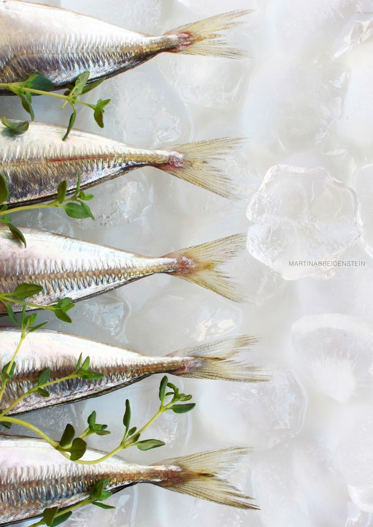 Food photography styling | Fish on ice | styled food photo