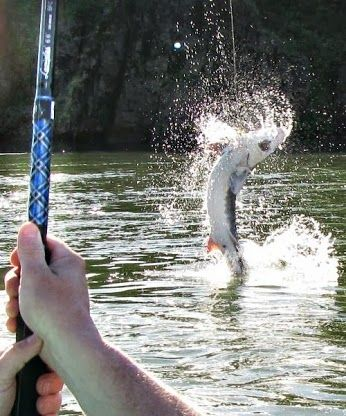 1000 images about sturgeon fishing on pinterest for Sturgeon fishing washington