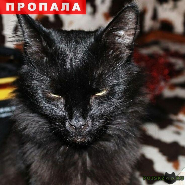Пропал кот чёрный г.Химки http://poiskzoo.ru/board/read31956.html  POISKZOO.RU/31956 Химки. Московская область. ПРОПАЛ КОТ! Полностью черный. Кастрирован. Нет двух верхних зубов, один клык обтесан. Сейчас может быть худой и покусан, могут быть шрамы от драк с котами. Мордочка вытянутая, не круглая, хвост длинный. Выпрыгнул с балкона на .. этаже и убежал. Ул. Бабакина ..а. Может находиться на ул. Бабакина, Панфилова, Юбилейный пр. .., ... В районе улиц около дома. Ищем .. недели. Откликается…