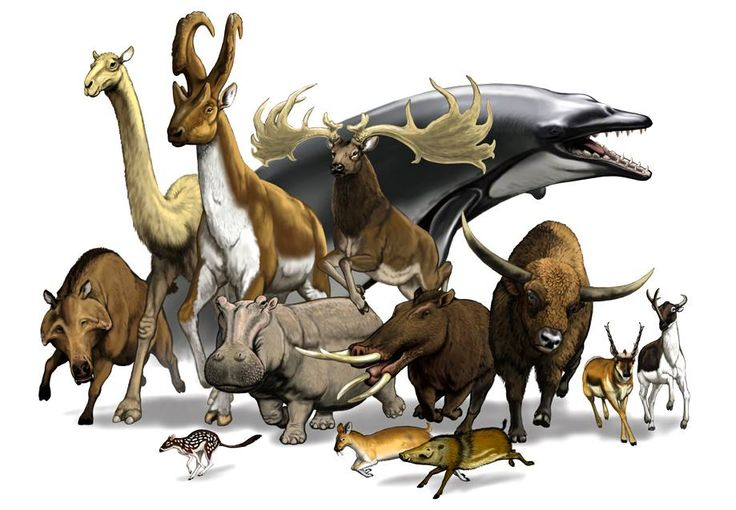 12 extinct artiodactyls- Indigo Taylor.                                                                                                                                                                                 More