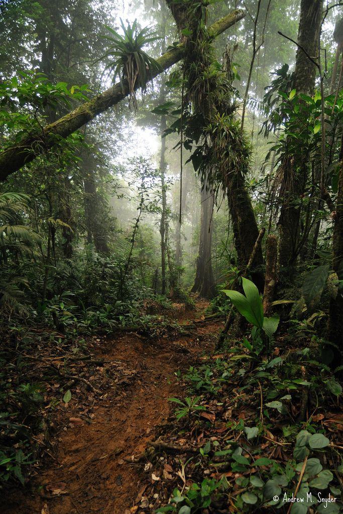 Cusuco National Park Tours