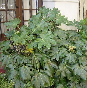 Garden Ideas Zone 6 53 best plants (zone 6) images on pinterest | gardens, garden