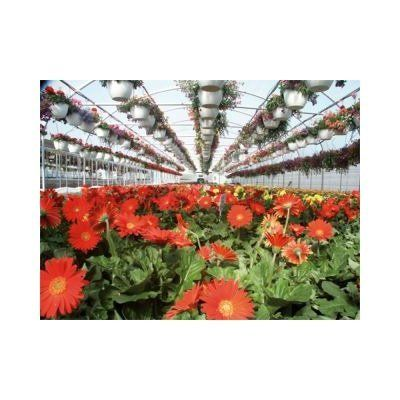 """Expansion Mansion Polyethylene and Polycarbonate Commercial Greenhouse Size / Span: 11'4"""" H x 42' W x 120' D with Double span by Poly-Tex. $24996.99. BM0024 Size / Span: 11'4"""" H x 42' W x 120' D with Double span Features: -Ideal for the new grower, it is easily expandable and upgradable with a variety of ventilation and mechanical system options.-Freestanding or gutter connected: Available as a 21-foot wide single freestanding bay or in any number of gutter connected bays.-The..."""