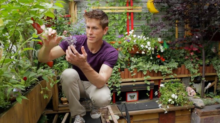 Video Small Space Gardener Show You How to Create & Make Look Great
