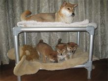 Kuranda Dog Beds - Rethinking Dog Beds - Aluminum Dog Bunk Bed Photo  Start building the unique Kuranda dog bed that you and your dog will love today, choosing everything from the size to the color of materials and accessories. Prices range from $50-$272.