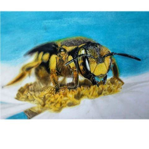 Finished a #wasp you guys. Was fun doing some depth of field effect :) A bit smaller than A4.  #color #pencil #art #illustration #drawing #draw #picture #artist #sketch #sketchbook #paper #artsy #instaart #beautiful #gallery #masterpiece #creative #instaartist #graphic #graphics #artoftheday #realism #photorealism