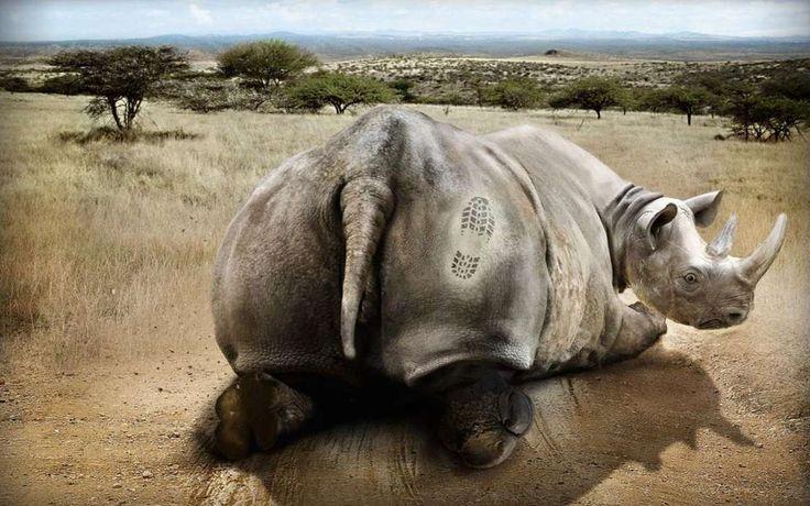 Kostenlose Handy-Wallpaper Humor, Tiere, Savanna herunterladen.