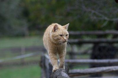 Cat Shedding - Best Pet Home Remedies