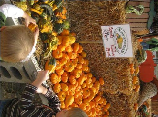 Visiting Pumpkin Patches in Kansas City