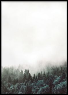 Snygg affisch / plansch med skog. Tavla med svartvitt fotografi av natur med skog och moln. Posters och prints med naturbilder och stämningsfulla fotografier. Meditativ tavla. Desenio.com / Desenio.se