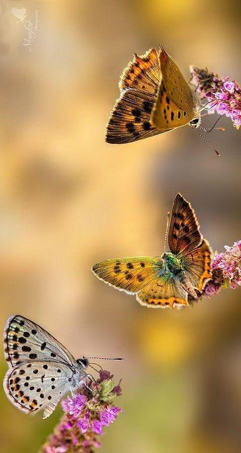 Butterflies aflutter   cynthia reccord
