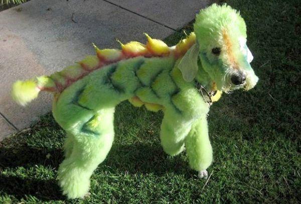 chat dragon 2