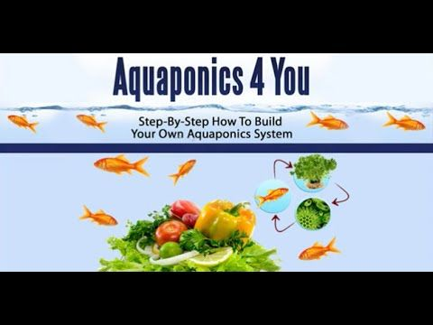 Step-By-Step - How To Build Aquaponics Systems