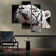 opgespannen doek witte tijger decoratie set van 4 – EUR € 62.99