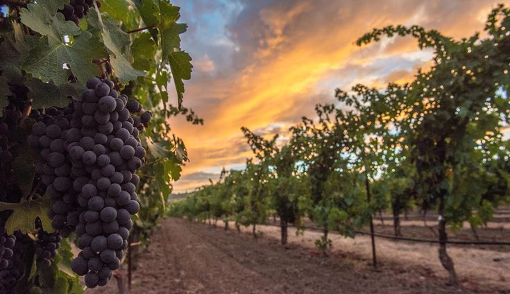 Do-It-Yourself Harvest: Grape Stomping & Wine Blending - The Visit Napa Valley Blog