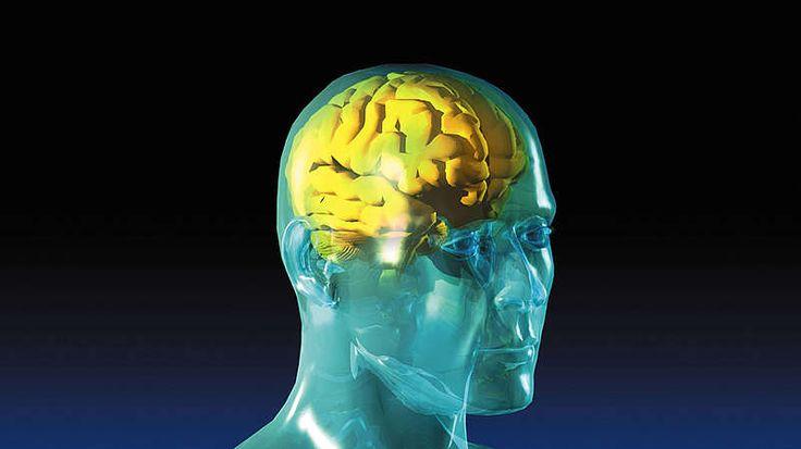 Gehirn  Das Gehirn ist unsere Steuerungszentrale – eine Station, die alles speichert und nichts vergisst. Hier werden alle durch das Nervensystem einlaufenden Informationen verarbeitet und Reaktionen gesteuert. Insgesamt wiegt es zwischen 1.350 und 1.500 Gramm, was relativ bis zu einem Dreiunddreißigstel des gesamten Körpergewichts eines Erwachsenen ausmacht. Keine andere Spezies weist ein so hohes absolutes und relatives Hirngewicht auf wie der Mensch.