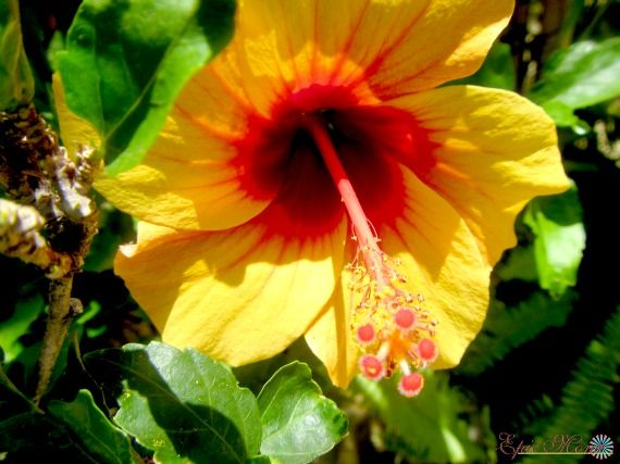 Caribbean Flowers: 102 Best Images About Epic Blog On Pinterest