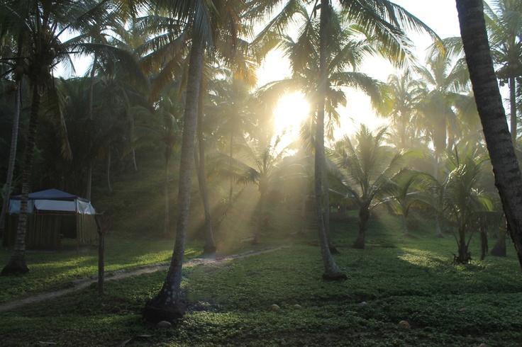 Atardecer en medio de palmeras