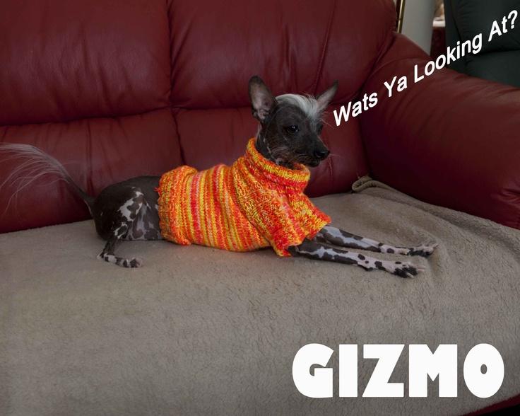 Gizmo- Wats ya looking at!