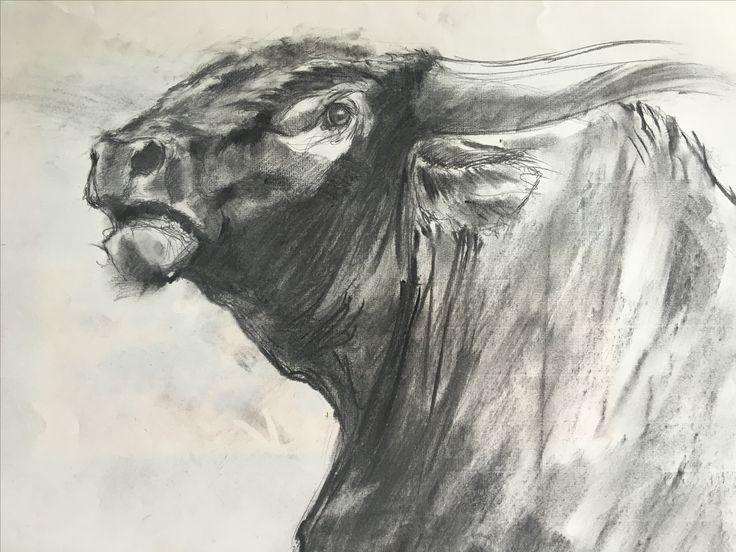 Bull. Pencil, charcoal
