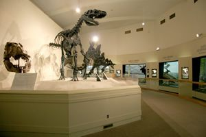 Michigan State University - Museum, dinosaurs I remember thinking were so amazing as a kid!