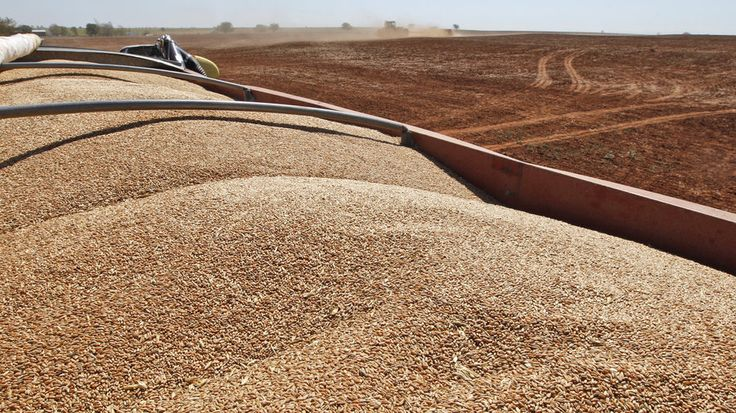 Low Wheat Prices Leave A Gluten Glut At Midwest's Grain Elevators