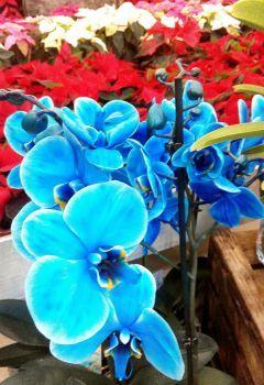 orchideje 2. (48 pieces)