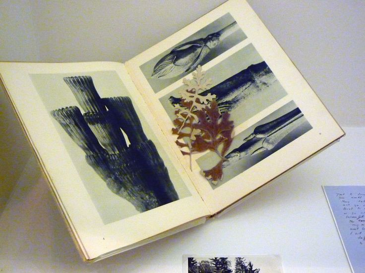 Eileen Agar, copy of Blossfeldt's Urformen der Kunst with leaves;