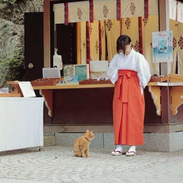江ノ島の巫女さんと猫