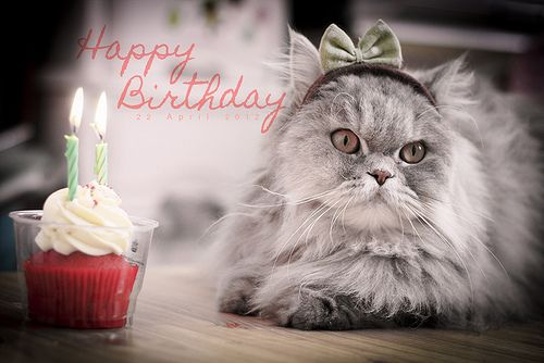 Cute Happy Birthday Cats Nice Kittens 25317wall.jpg