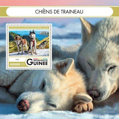 GU16419b Sledge dogs (Husky)