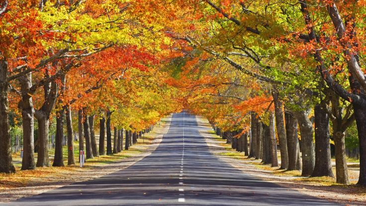 Honour Avenue in Autumn, Mount Macedon