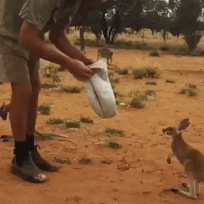 And the easiest animal to kidnap award goes to.. http://ift.tt/2j1xr41